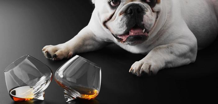 copenhagen-cognac